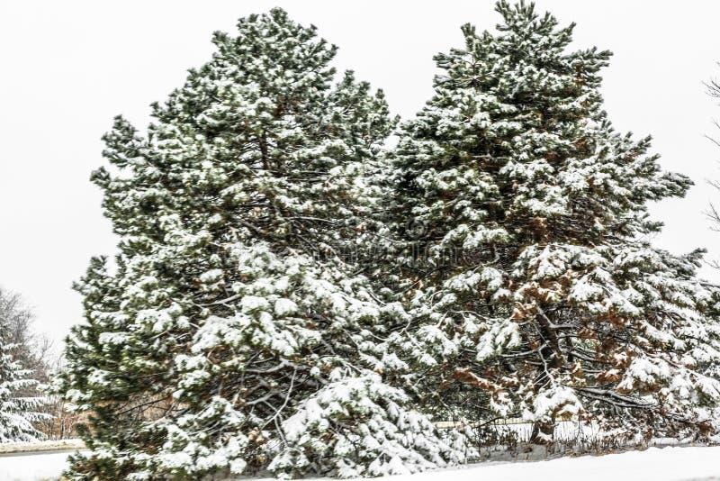 Winter in Ontario, Canada. Snow scene of the white winter in Ontario, Canada stock image