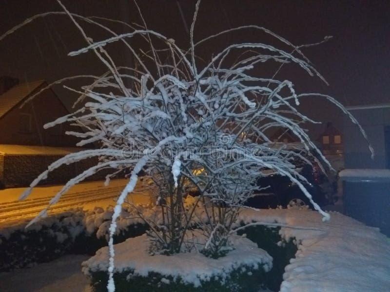 Snow Spider bush royalty free stock photo