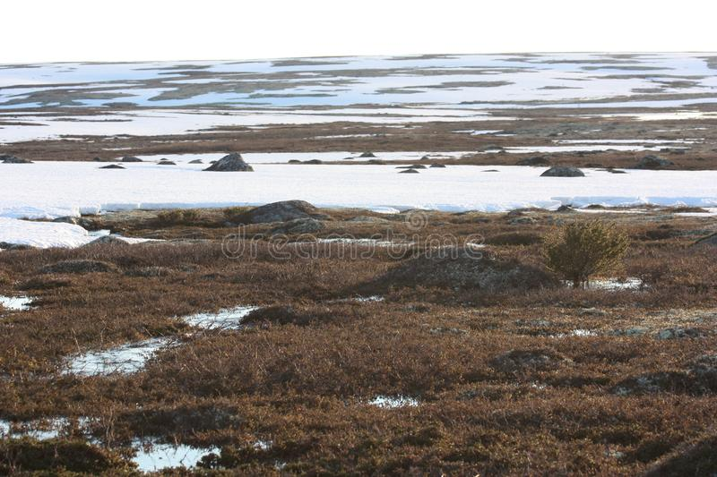 Snow in the spring the tundra. royalty free stock photo