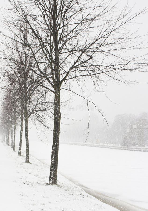 Free Snow Storm Royalty Free Stock Photos - 17426348
