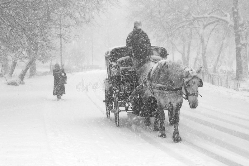 Snow storm. In Central Park, New York royalty free stock photo