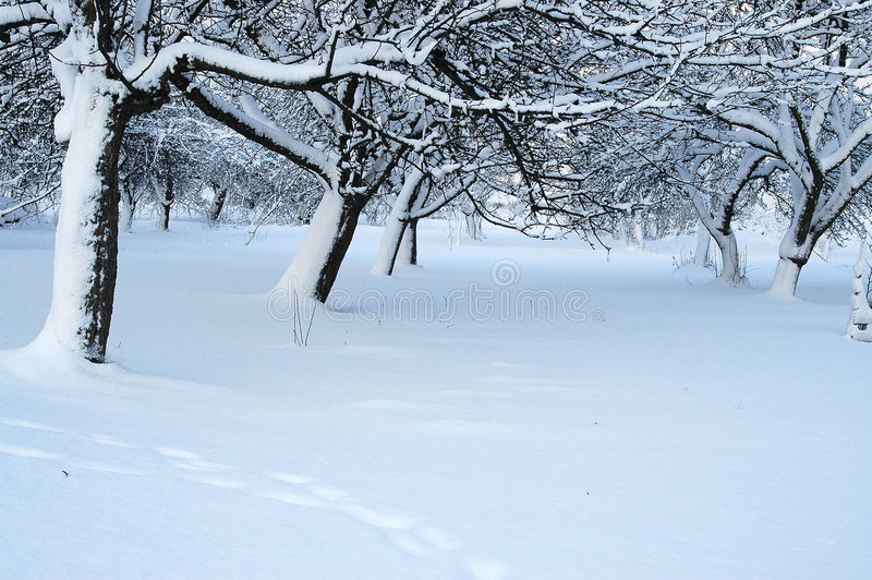Download After Snow Storm stock image. Image of winter, snow, freezing - 2895575