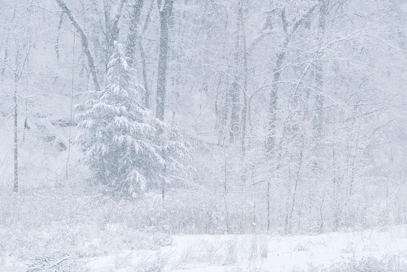 Download Snow storm and forest stock photo. Image of winter, peaceful - 22795450