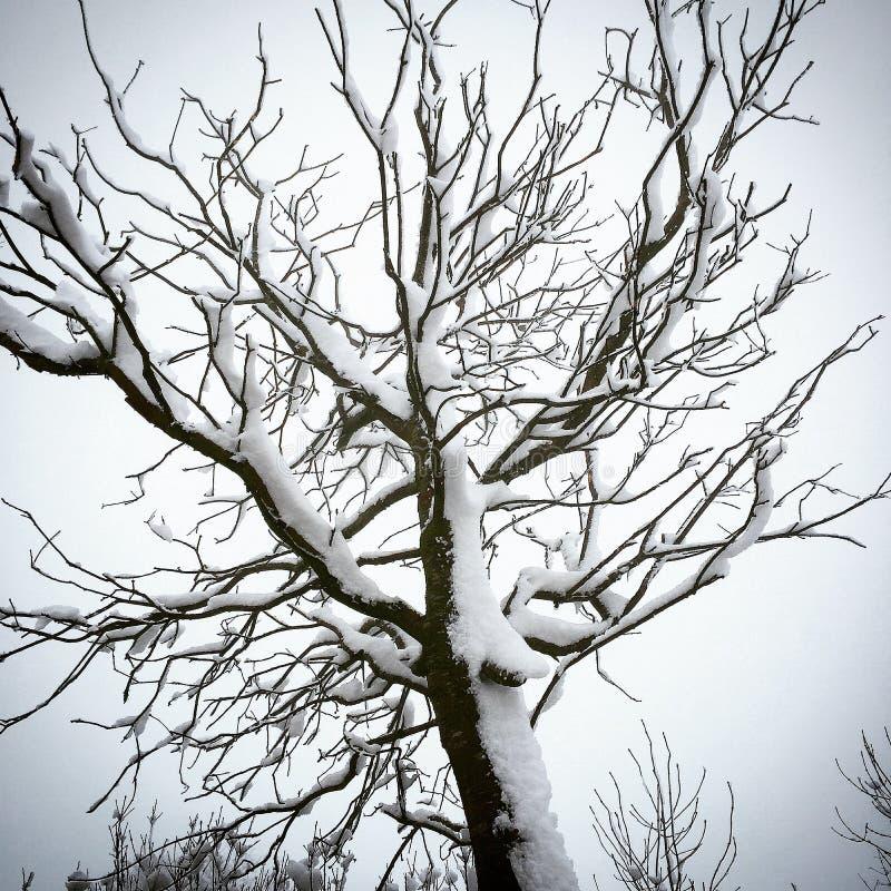 Snow stuck to a tree stock image