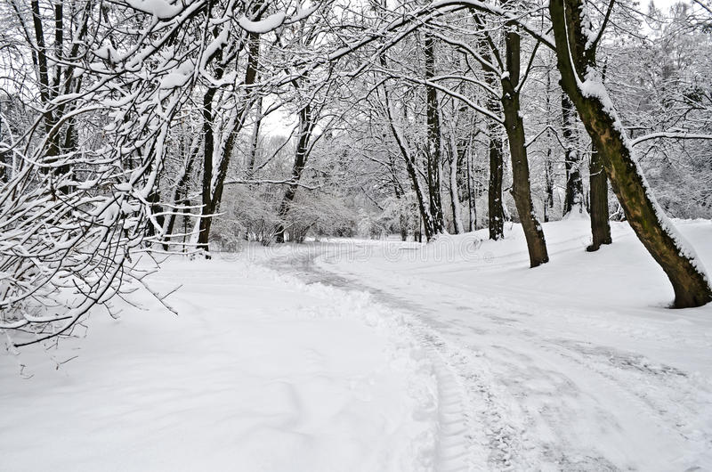 Vintern parkerar royaltyfria foton