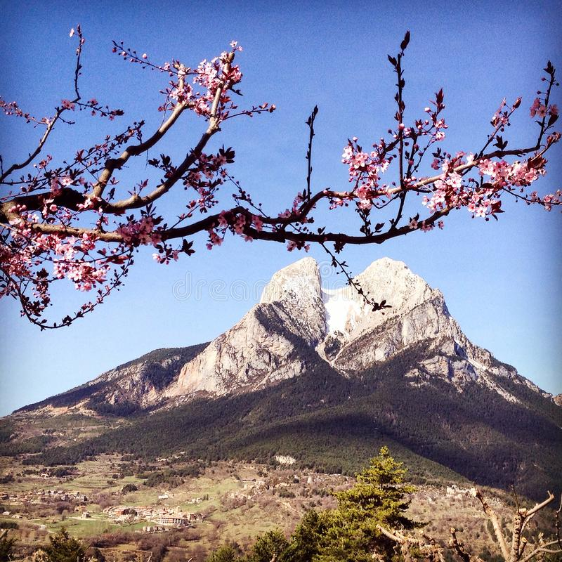 Pedraforca, Spain Beautiful mountain with the pink apple tree blossoms royalty free stock photography