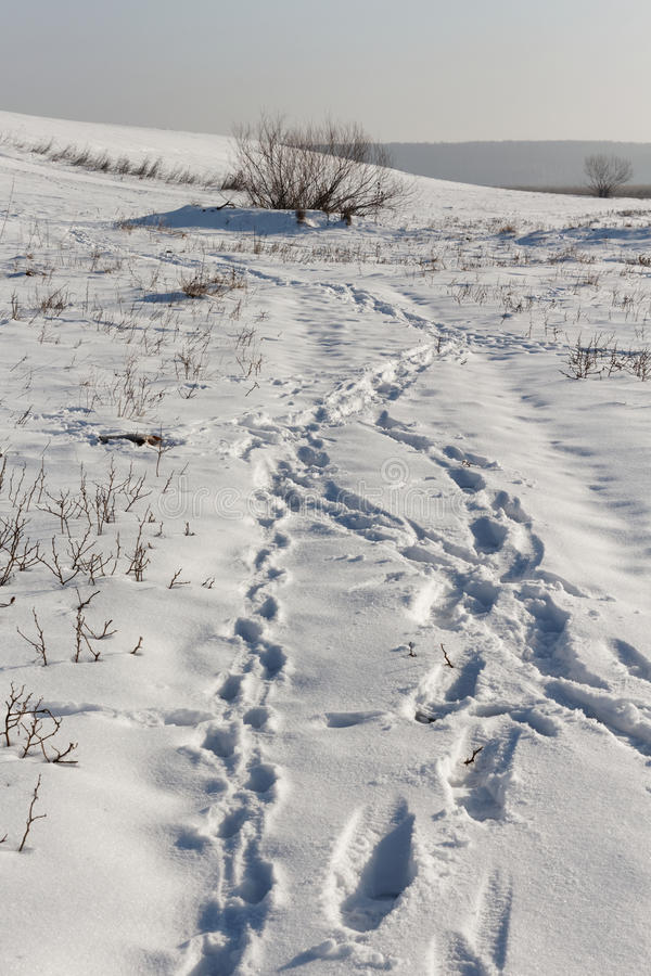 Snow traces royalty free stock photography