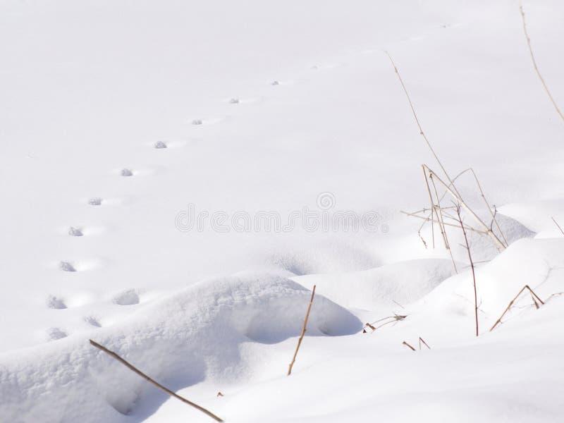 Download Snow Tracks - Horizontal stock photo. Image of fresh, trail - 605882