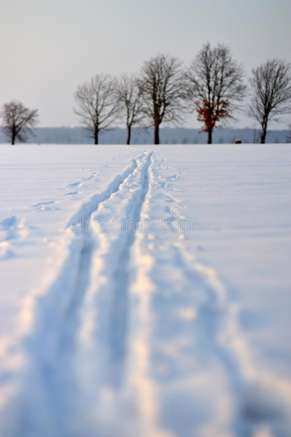 Download Snow trail stock photo. Image of landscape, skating, country - 27004108