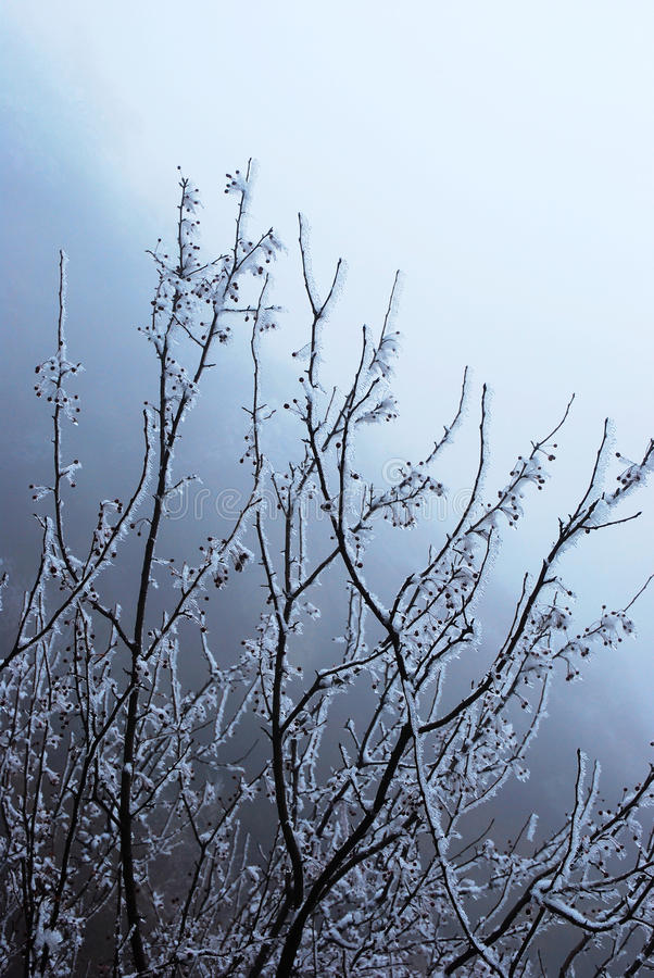 Snow tree. It is a beautiful snow tree royalty free stock images