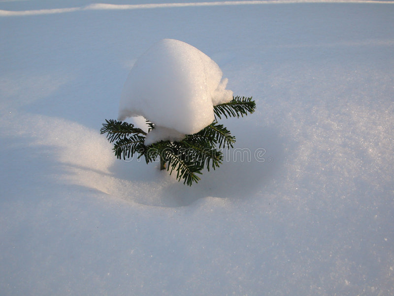 Download Snow tree stock image. Image of xmas, nature, still, calm - 42943