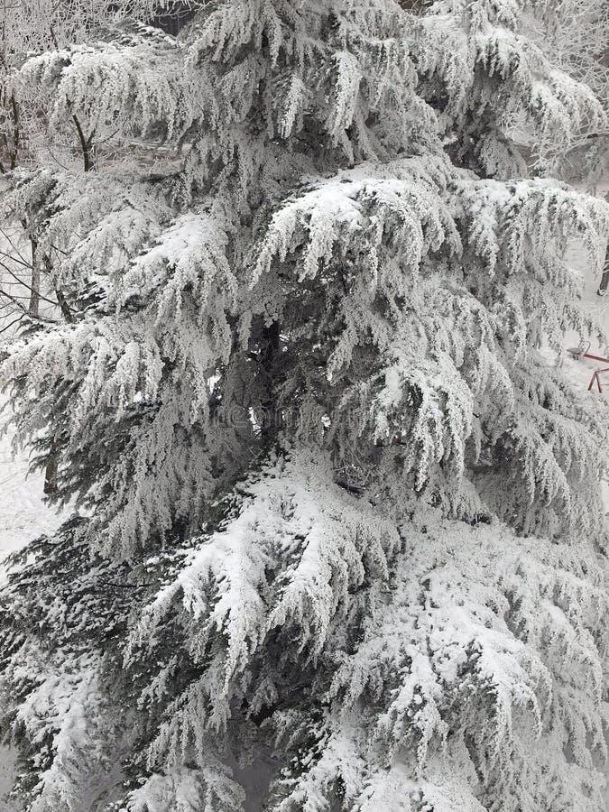 Free Snow Tree Stock Photo - 9868970