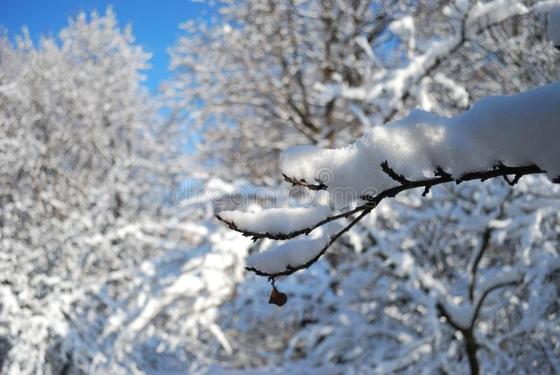 Snow on tree branch. stock photos