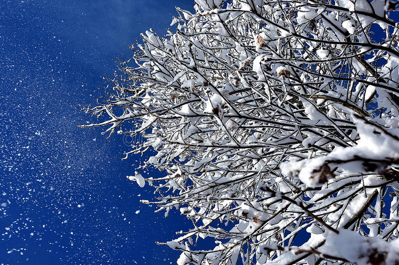 Snow on tree branches. Snow on the branches of tree in a beautiful winter morning with a background of blue sky royalty free stock photo