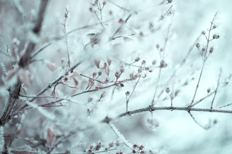 Snow on the tree branches. Winter View of trees covered with snow. The severity of the branches under the snow. Snowfall in nature royalty free stock photo
