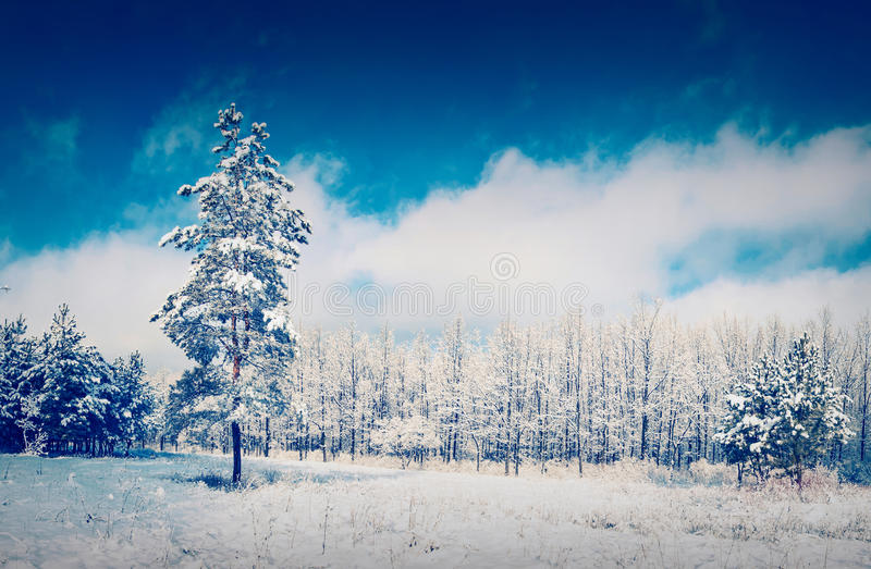 Snow tree on a glade royalty free stock photo