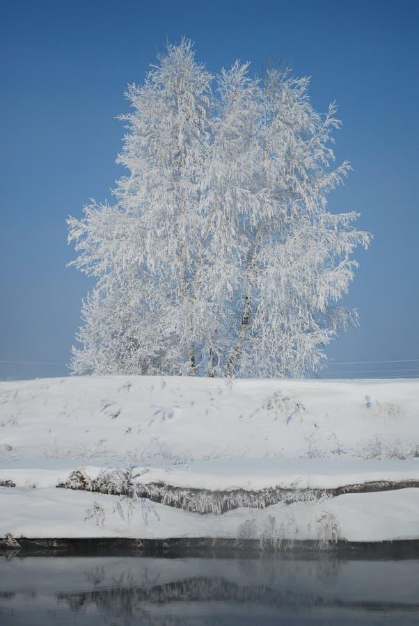 Snow on tree near river