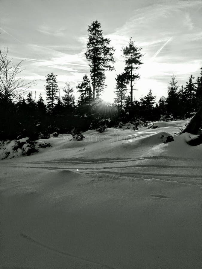 Snow tree sum withe stock photo