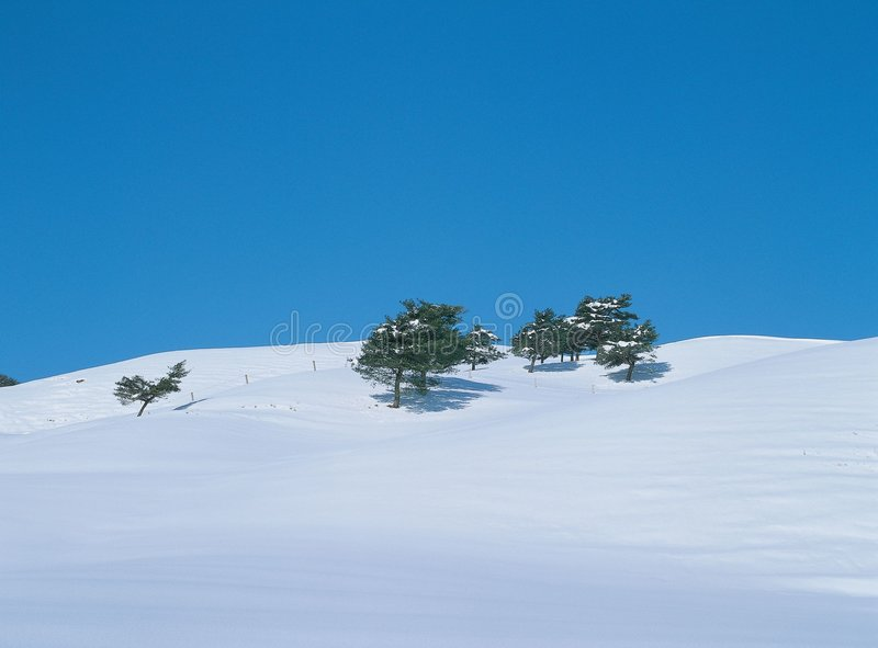 Snow and Trees royalty free stock images