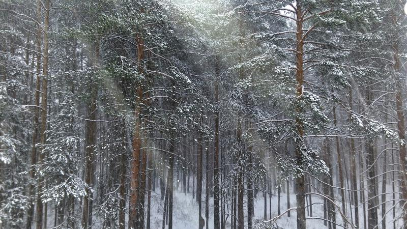 Snow on the trees stock image
