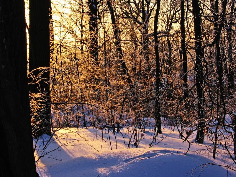 Snow, trees and sun. stock photo