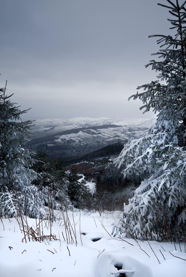 Snow on trees up a mountain stock photo