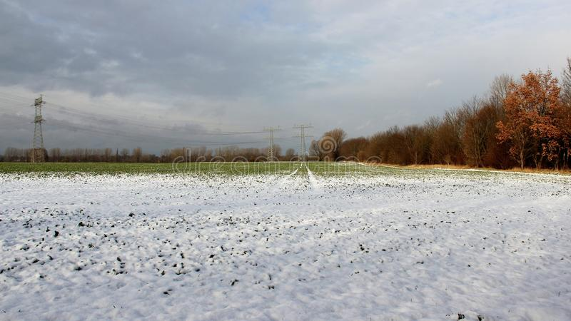 Snow on vegetables plantation royalty free stock image
