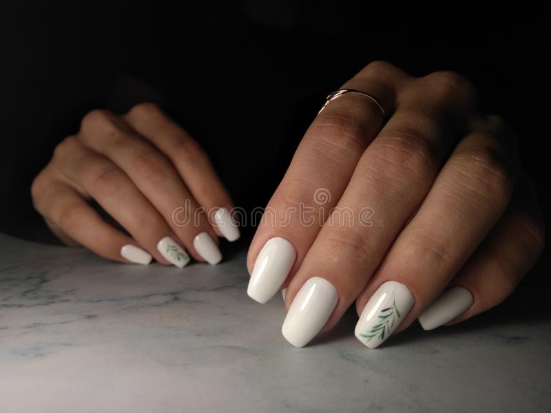 Snow-white gel Polish with a green twig. Long square nails with white coating and green twig design stock photos