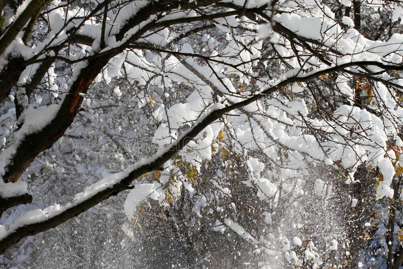 Snow. White snow on green trees. Winter and spring concept. Natural wallpaper. Winter background. stock photos
