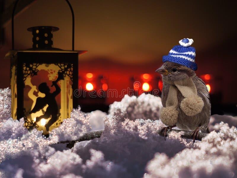 Snow, Winter, Christmas, Freezing royalty free stock photos