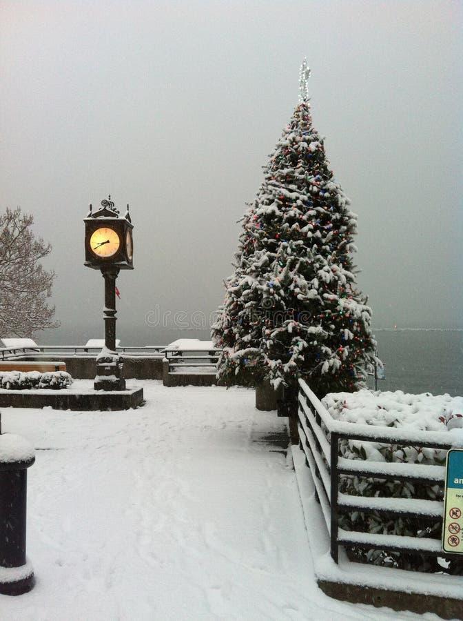 Snow, Winter, Christmas Tree, Tree royalty free stock image