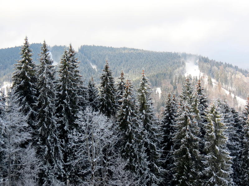 Snow winter forest stock image