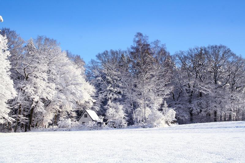 Snow, Winter, Frost, Tree stock images