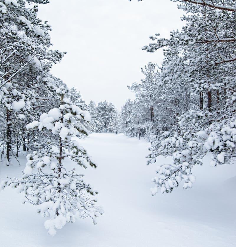 Snow Winter Landscape Stock Photography
