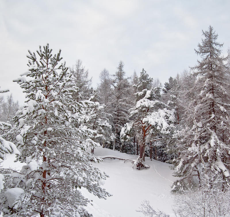 Download Snow winter landscape stock photo. Image of outdoors - 17869516