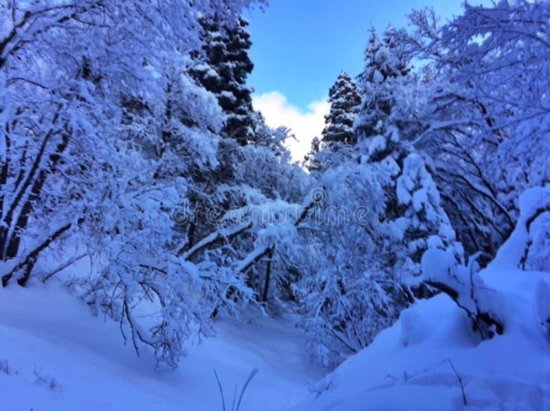 Snow Winter Landscape Free Public Domain Cc0 Image