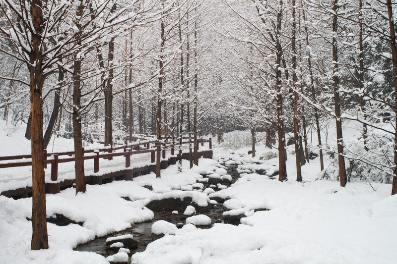 Snow woods and river royalty free stock image