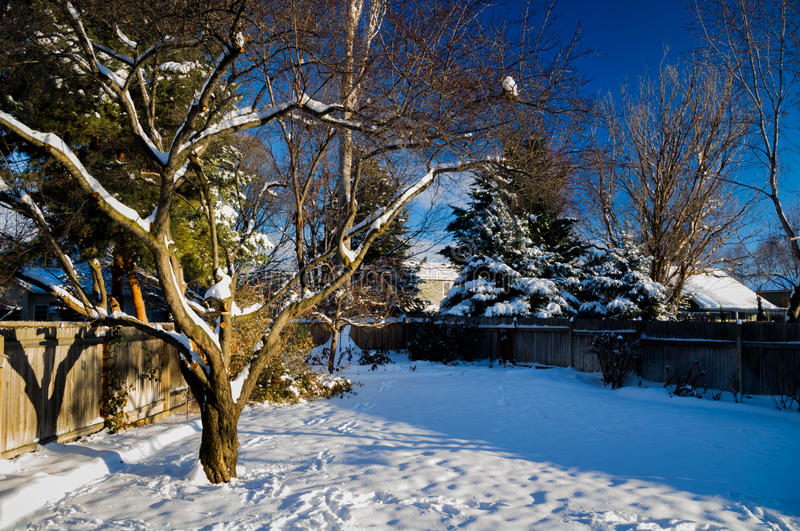 Snow in Yard Final. A snow covered yard with a blue sky royalty free stock images
