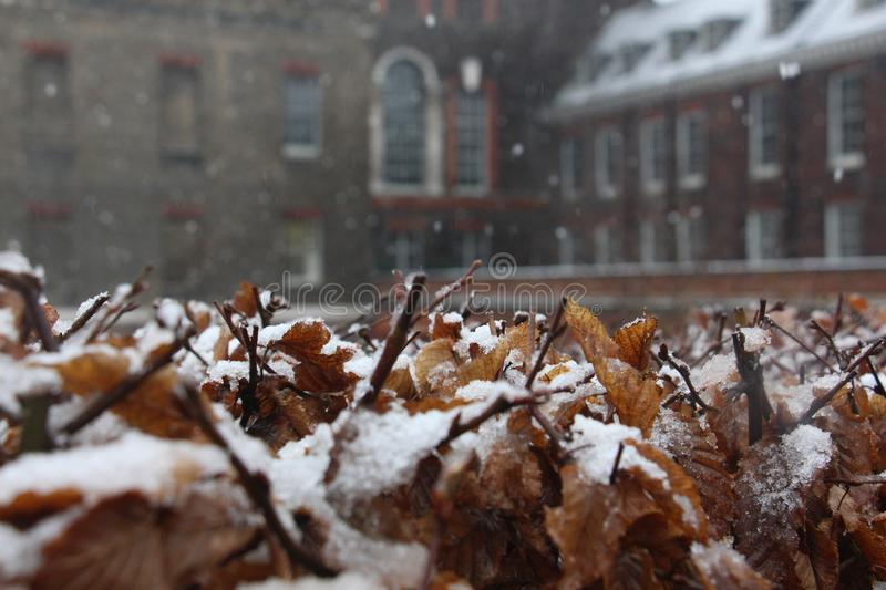 Snow on the yellow leaves with architecture in the background royalty free stock photography