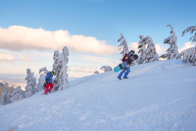 2 snowboarders поднимают вверх между изогнутыми покрытыми снег елями стоковая фотография rf