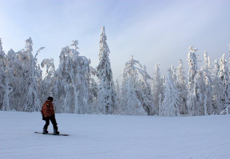 Snowboarding i vinterskog fotografering för bildbyråer