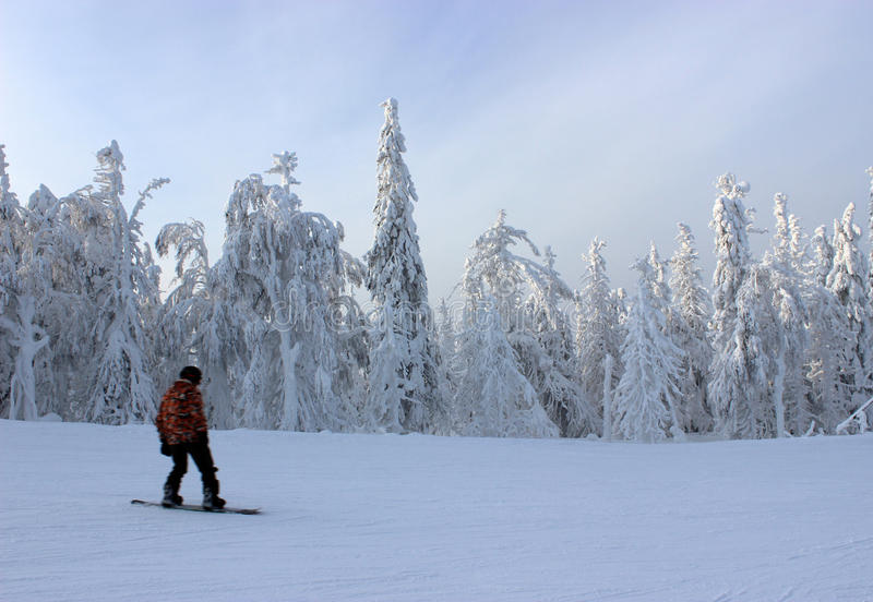 Snowboarding in winter forest stock image