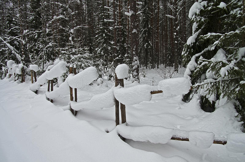 Download Snowbound Hurdle In Winter Forest. Stock Photo - Image of blanch, wood: 30694056