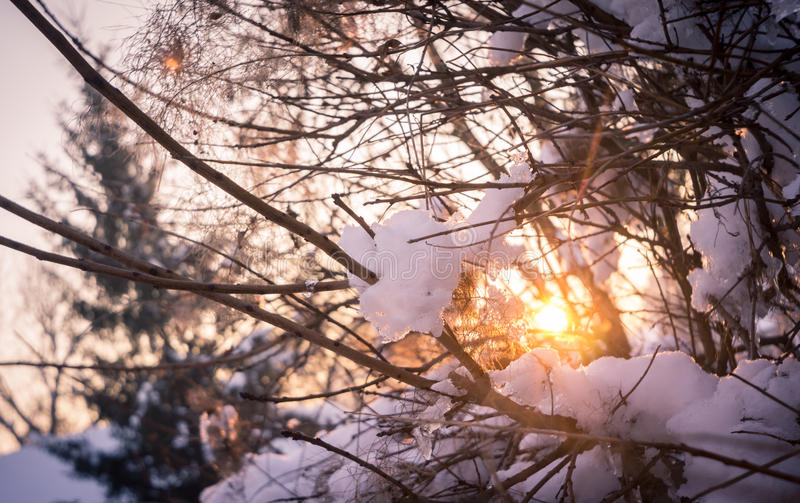 Snowbound Winter Foliage royalty free stock photo