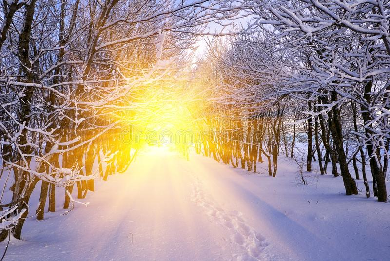 Snowbound winter forest at the evening royalty free stock images