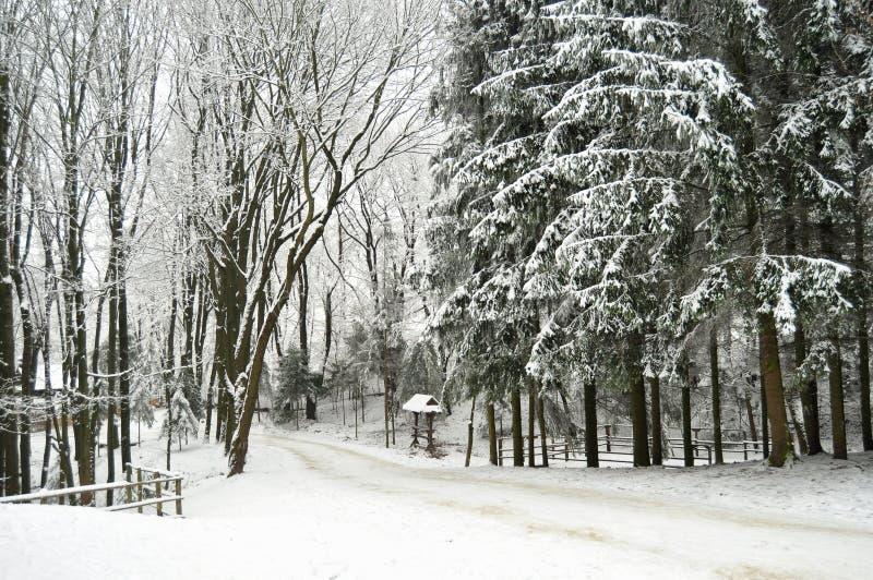 Snowbound zima las z elementami drewniana dekoracja - zrzuca ogrodzenie i kapuje Na wolnym powietrzu muzeum w Lviv zdjęcia royalty free