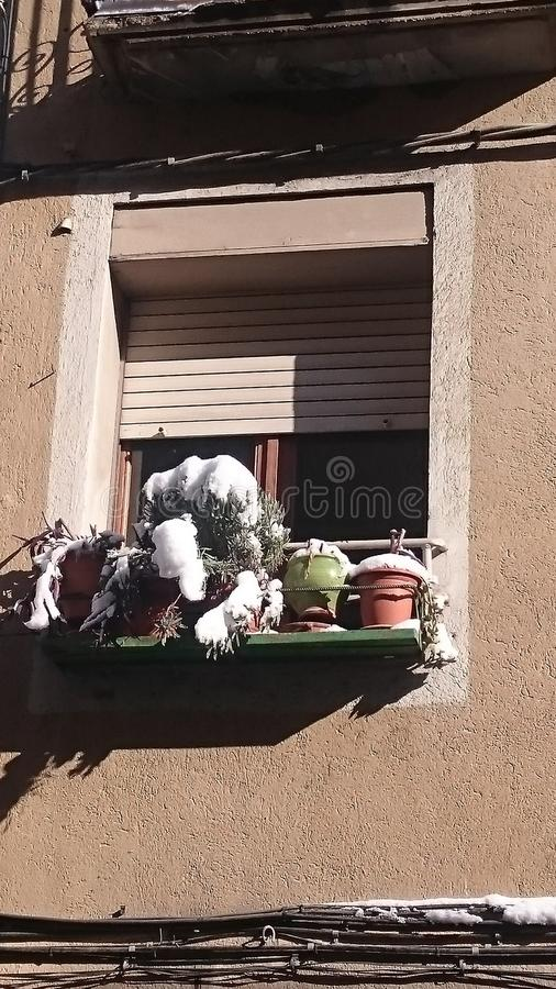 Snowcapped flowers on a regular window royalty free stock image