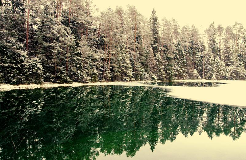 Snowcapped Trees Near Body Of Water stock photo