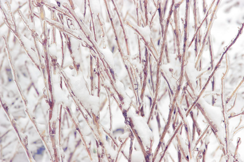 Snowcovered branch. Photo texture with snowcovered and ice-covered branches stock photos