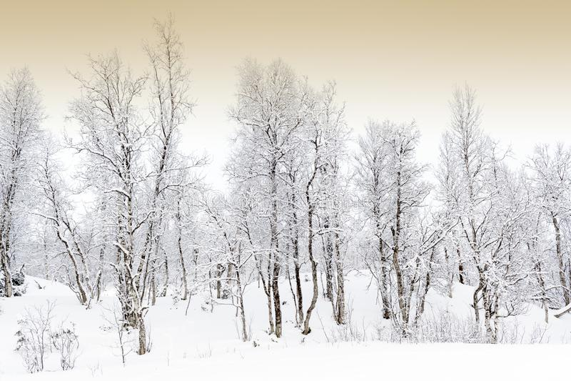 Snowcovered las w Arktycznym obraz royalty free